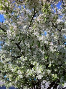 Spring blossoms are here and with them come May Day Rallies.