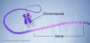 Gene and chromosome. Does harassment start here?