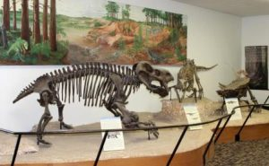 Dinosaur skeleton, Rainbow Forest Museum. Are civil rights leaders relics? NPS photo.
