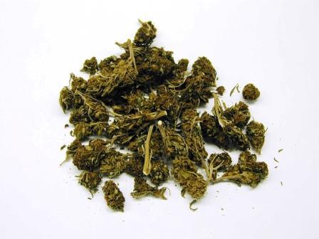 Marijuana buds. DEA photo.
