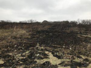 Blackened landscape with burned vegetation